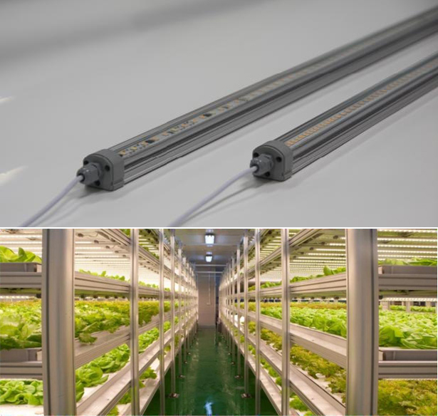 KP-A205 : Plant growth LED lighting, Plant factory system image
